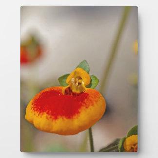 Flores de la flor del monedero de una señora placa