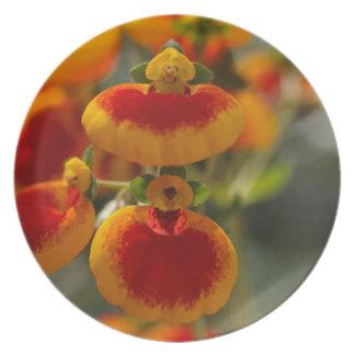 Flores de la flor del monedero de una señora platos para fiestas