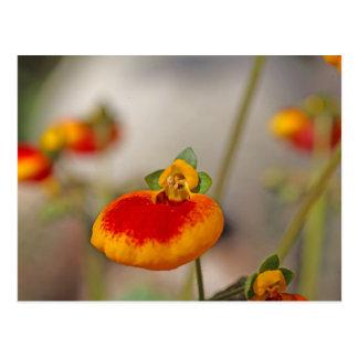 Flores de la flor del monedero de una señora postales