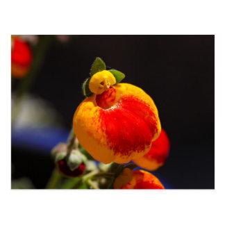 Flores de la flor del monedero de una señora tarjeta postal