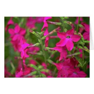 Flores de la fuente tarjetón