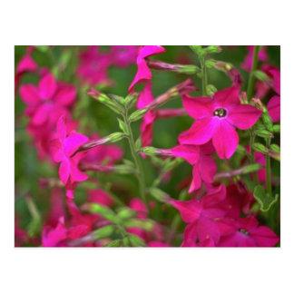 Flores de la fuente tarjeta postal