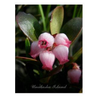 Flores de la gayuba, isla de Unalaska Tarjeta Postal