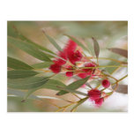 Flores de la goma tarjeta postal