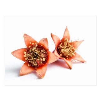 Flores de la granada tarjeta postal