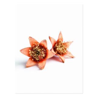 Flores de la granada tarjetas postales