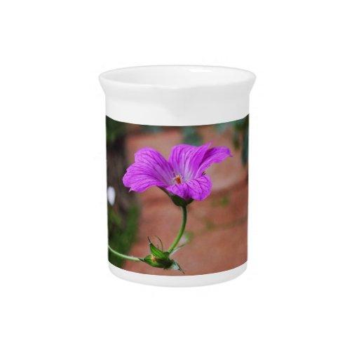 Flores de la lavanda jarra