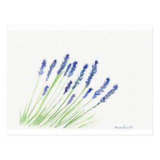 Flores de la lavanda tarjetas postales