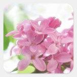 Flores de la lila en la luz del sol de la mañana calcomanias cuadradas