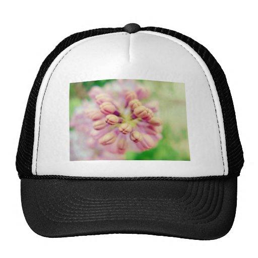 Flores de la lila gorros