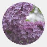 Flores de la lila pegatina redonda