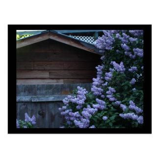 Flores de la lila y mini impresión de madera vieja tarjeta postal