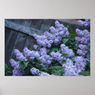 Flores de la lila y poster de madera viejo