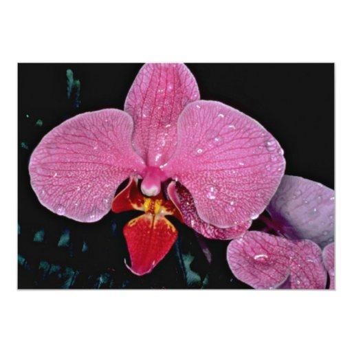 Flores de la luciérnaga de Zuma Invitación 12,7 X 17,8 Cm