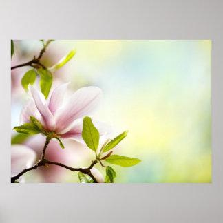Flores de la magnolia póster