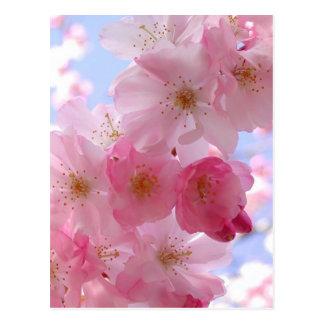 flores de la manzana tarjeta postal