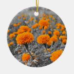 Flores de la maravilla o de Tagetes Ornato