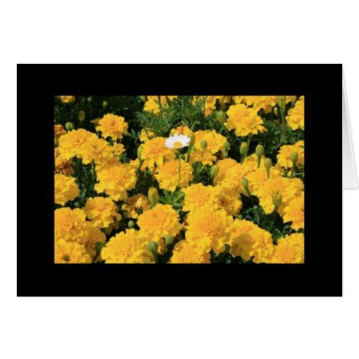 Flores de la maravilla y una tarjeta de felicitaci