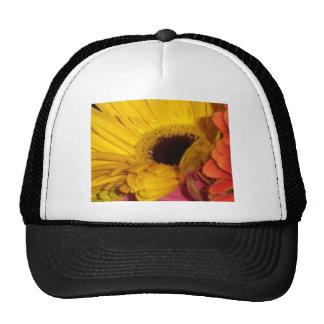 flores de la margarita del gerber gorra