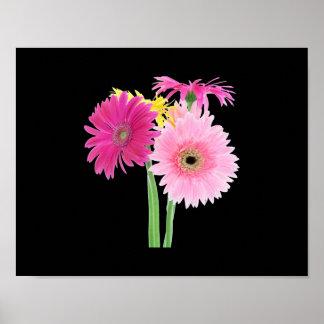 Flores de la margarita del Gerbera Poster