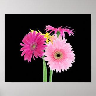Flores de la margarita del Gerbera Posters