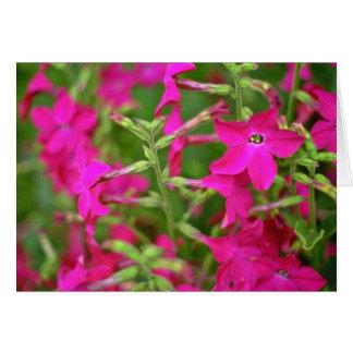Flores de la nicociana felicitacion