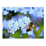 Flores de la nomeolvides con Hoverfly Postal