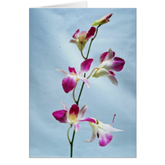 Flores de la orquídea de Singapur Tarjeta De Felicitación