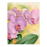 Flores de la orquídea del Phalaenopsis - multi Tarjetas Postales