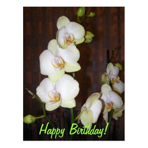 Floresde la orquídea postal