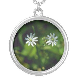 Flores de la pamplina común (medios del Stellaria) Grimpolas Personalizadas