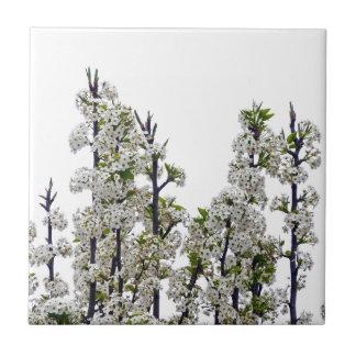 Flores de la pera de Bradford Azulejo Cuadrado Pequeño