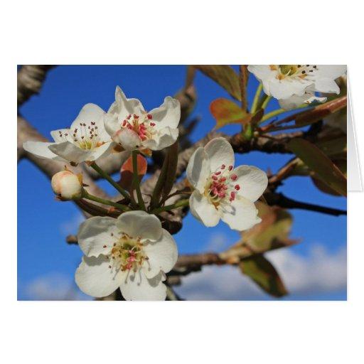 Flores de la pera tarjeta pequeña