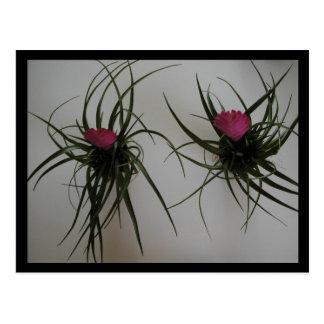 Flores de la pestaña postales
