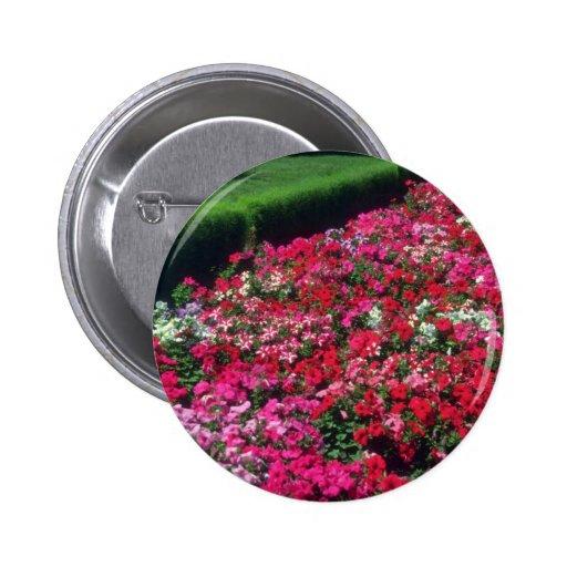 Flores de la petunia del jardín (Cv de la petunia) Pin Redondo 5 Cm
