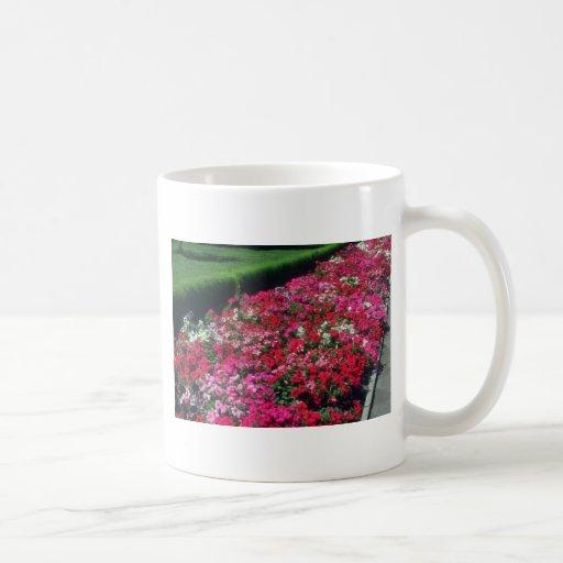 Flores de la petunia del jardín (Cv de la petunia) Taza De Café