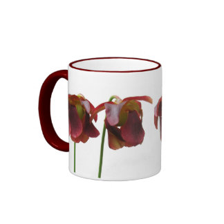 Flores de la planta carnívora tazas de café