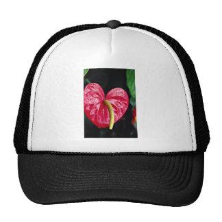 Flores de la planta de flamenco gorros bordados