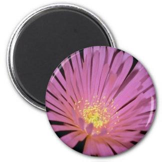 Flores de la planta de hielo glomeratus de Lampra Imán Para Frigorífico