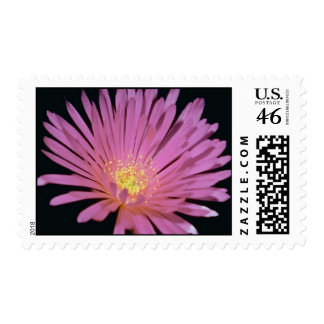 Flores de la planta de hielo glomeratus de Lampra Sellos