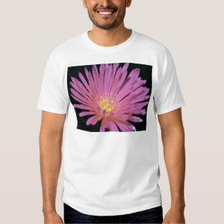 Flores de la planta de hielo (glomeratus de playera