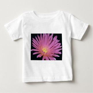 Flores de la planta de hielo (glomeratus de playeras
