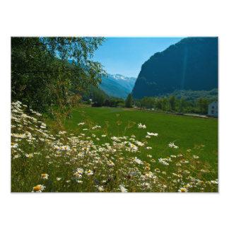 Flores de la primavera de Noruega Fotografías