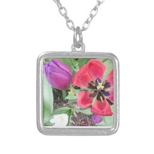 Flores de la primavera en la floración collar plateado