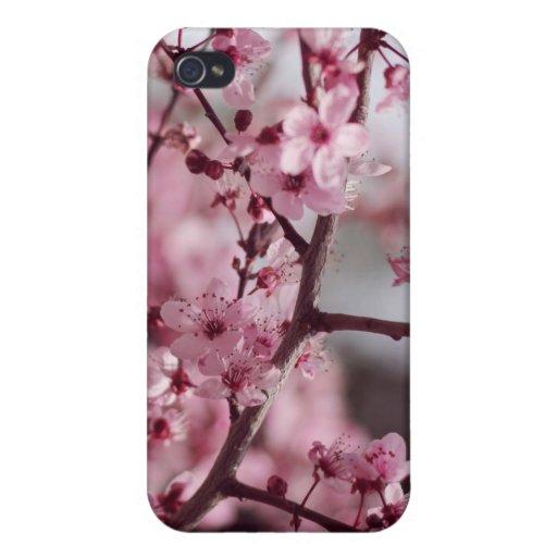 Flores de la primavera, flores de cerezo, caso del iPhone 4 coberturas