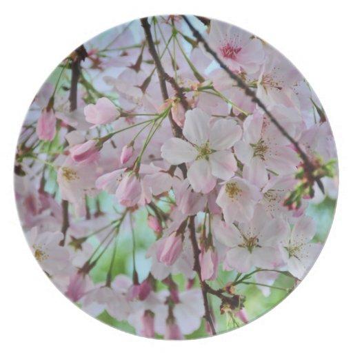 Flores de la primavera platos
