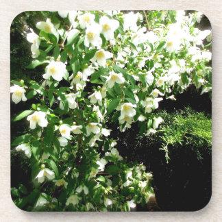 Flores de la primavera posavaso