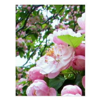 Flores de la primavera postales
