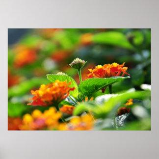 flores de la primavera póster
