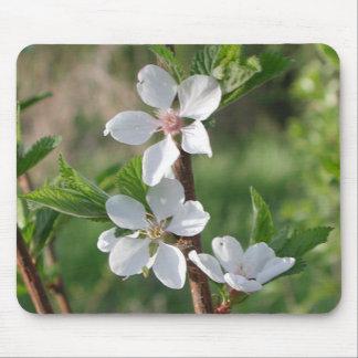Flores de la primavera tapete de ratón